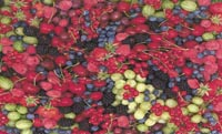 22 Berries Large limited edition prints by John Neville Cohen